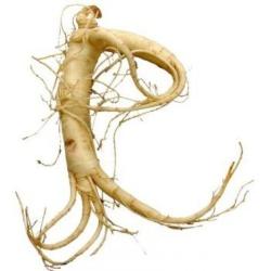 корінь женьшеню рецепти