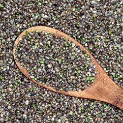 властивості насіння конопель посівних